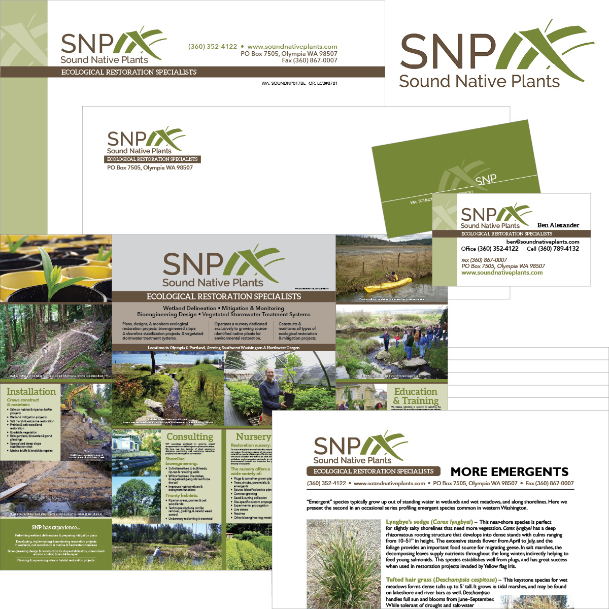 Sound Native Plants Identity